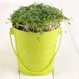 салат,зелень,кресс салат
