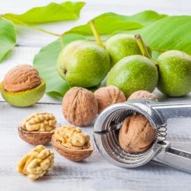 польза молодого грецкого ореха