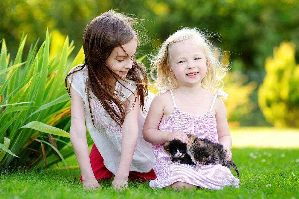 дети и котята