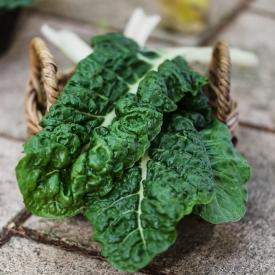Мангольд: все, что нужно знать о листовой свекле