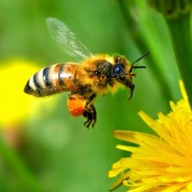 укус насекомых,укус осы,укус пчелы