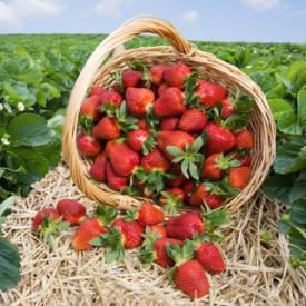клубника,ягоды