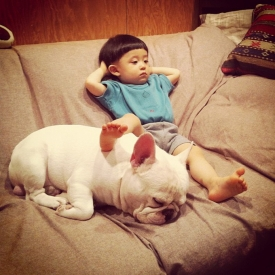 собака,дети,домашнее животное