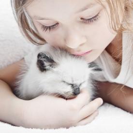 кошка,домашнее животное,царапины