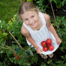 помидоры,томаты,вредные продукты,овощи