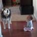 видео,домашнее животное