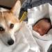 собака,домашнее животное,животное в доме,дети и животные