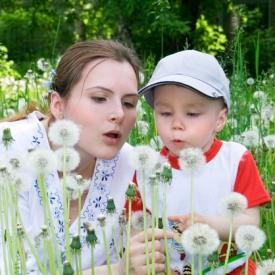 зеленая аптека,лечение травами,народная медицина
