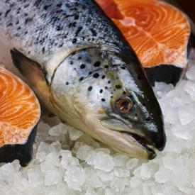 свежая рыба,как выбрать,признаки несвежей рыбы