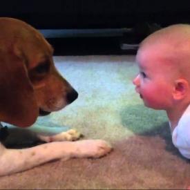 собака,видео,смешное детское видео