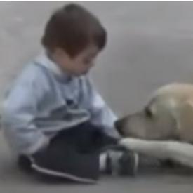 собака поилгает ребенку,трогательное видео,ребенок с синдромом Дауна
