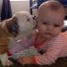 собака,новорожденный,видео,смешное детское видео