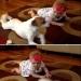 как научить ребенка ползать,собака,видео