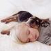 домашние животные,питомец,щенок,собака