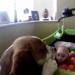 видео,собака,смешное детское видео