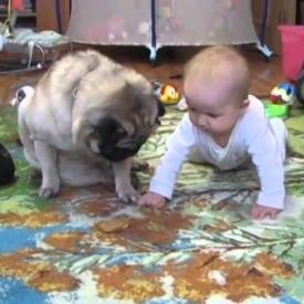 видео,смешное детское видео,жадность,домашнее животное,собака