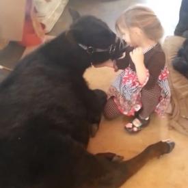 видео,смешное детское видео,дети и животные