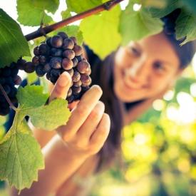 виноград,экстракт виноградных косточек,косметология,красота