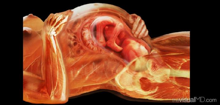 К чему снится переезд беременной девушке 78
